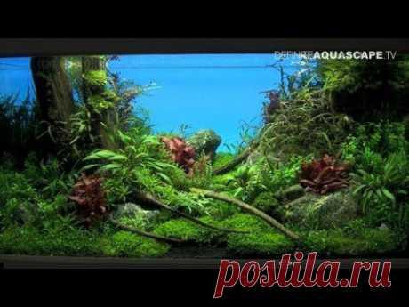 Aquascaping - The Art of the Planted Aquarium 2013 XL, pt.1 - YouTube