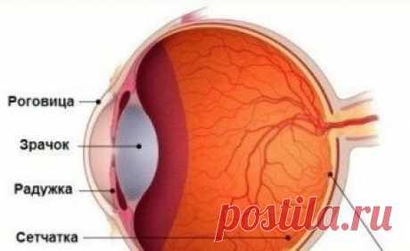 Лечение макулодистрофии народными средствами. Болезни глаз