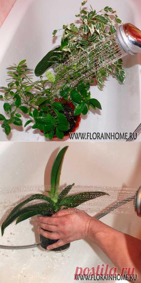 Горячий душ для растений.