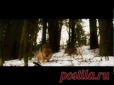 ▶ Шансон - одинокий волк HD - YouTube