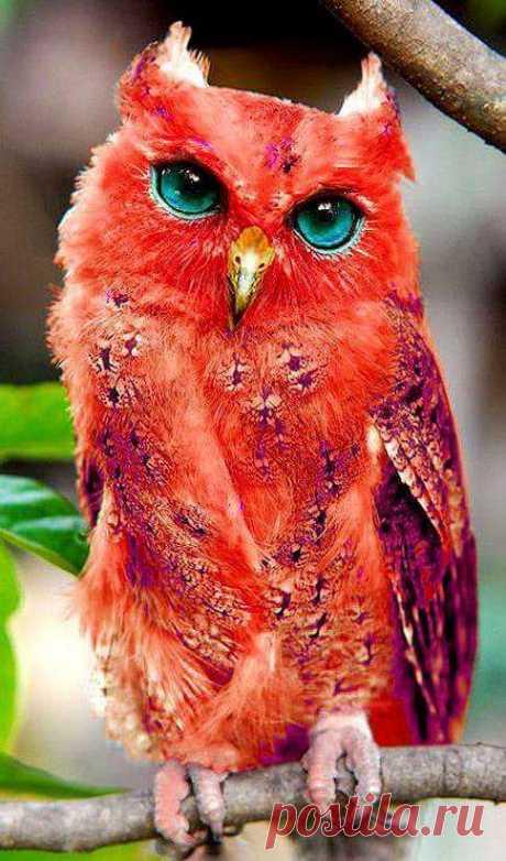 angelillo — Beautiful Owl.