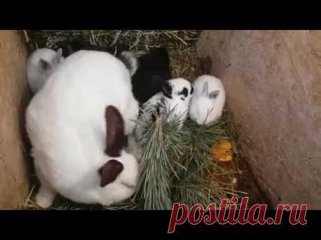 Кормление кроликов СОСНОЙ !!! КАК это БЫЛО)))) дача