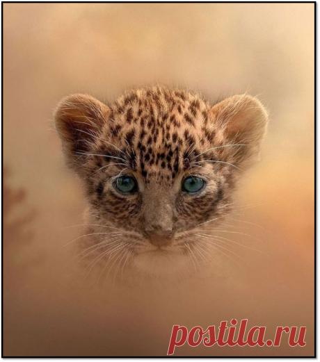 Изумительные и неповторимые кадры | AZAS | Яндекс Дзен