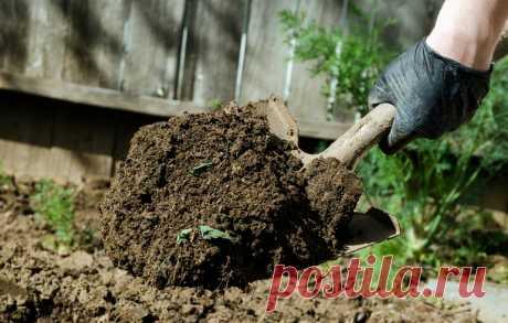 С помощью небольших хитростей земля в огороде будет всегда рыхлой: внесение удобрений, мульчирование