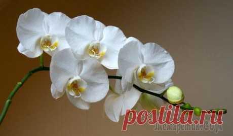 Правильный уход за орхидеями!