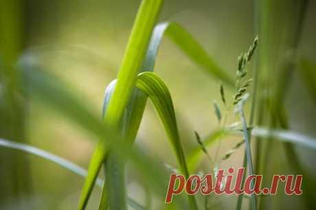 Как справиться с пыреем – 7 надежных способов | Почва и плодородие (Огород.ru)