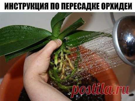 КАК ПЕРЕСАДИТЬ ОРХИДЕЮ: ПОШАГОВАЯ ИНСТРУКЦИЯ  Шаг 1  Достаньте орхидею из горшка и положите её в широкий таз. Чтобы вам легче было вытащить орхидею, помните слегка стенки горшка. Если это не поможет – аккуратно, чтобы не повредить воздушные корни фаленопсиса, разрежьте или разбейте старый горшок.  Обычно, чем сильнее развита корневая у фаленопсиса, тем крепче она «держится» за горшок, и тем труднее её освободить. Однако если орхидея ослаблена или больна, у неё мало живых к...