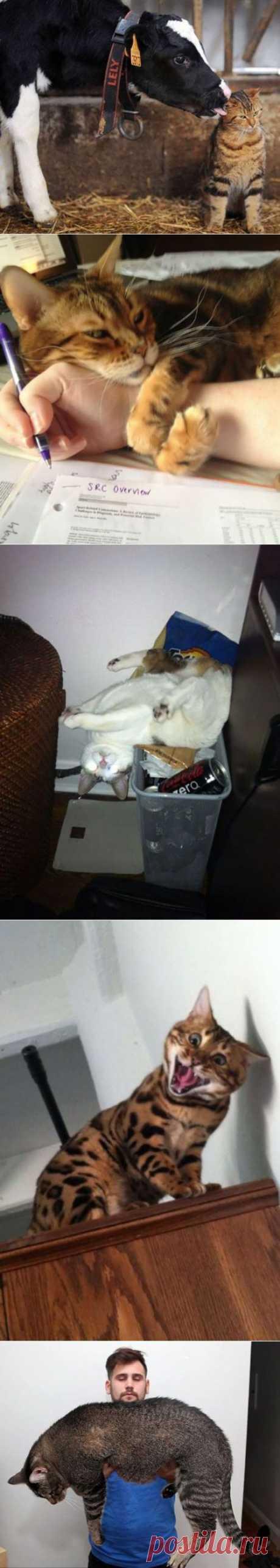 Коты и кошки | Позитив в картинках и не только
