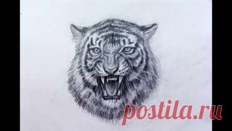 Рисунок морды тигра– Google Поиск