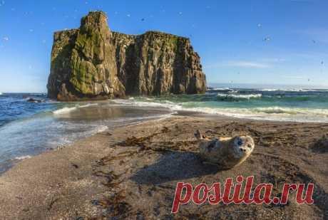 Любопытная нерпа смотрит на фотографа Андрея Носика (nat-geo.ru/community/user/50767/) в гидрокостюме и дивится: а это что за зверь такой? Птичьи острова, Курилы.