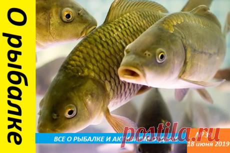 Привлекающий деликатес для карася или вареное яйцо как наживка | О рыбалке 🎣 | Яндекс Дзен