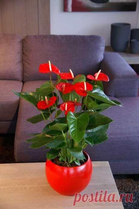 8 лучших комнатных растений-фильтров. Какие растения лучше очищают воздух? Список, фото - Ботаничка.ru - Страница 7