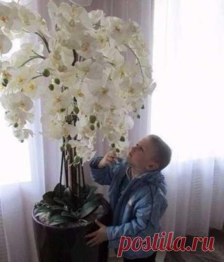 Вот так Орхидея!