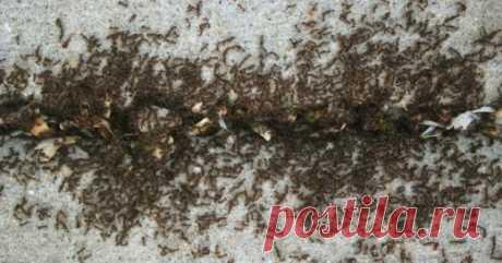 Рассыпьте эту специю в углах своего дома – и вы больше никогда не увидите муравьев!      Если корица для нас – это прекрасная специя, то для муравьев – это настоящий ад! Оказывается, корица влияет на основное средство общения муравьев: феромонные тропы. Муравьи полагаются на свое обо…