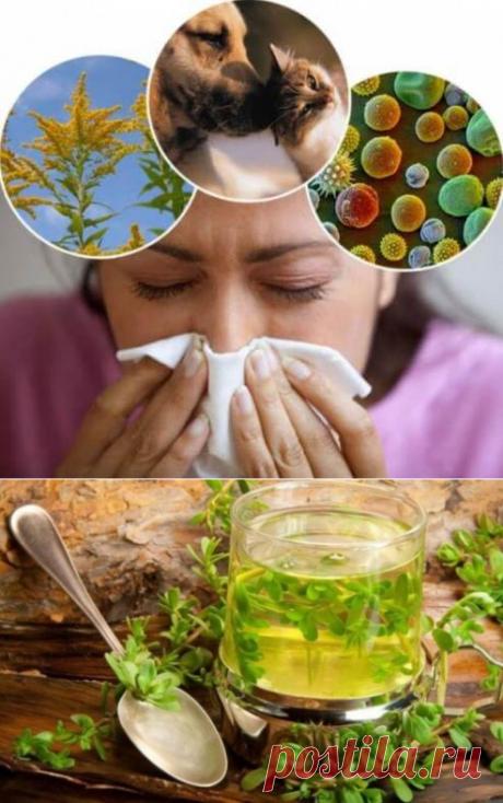 От аллергии как лечиться хочу я поделиться: советы от аллергика, которая сама лечит всю семью. | Тысяча и одна идея
