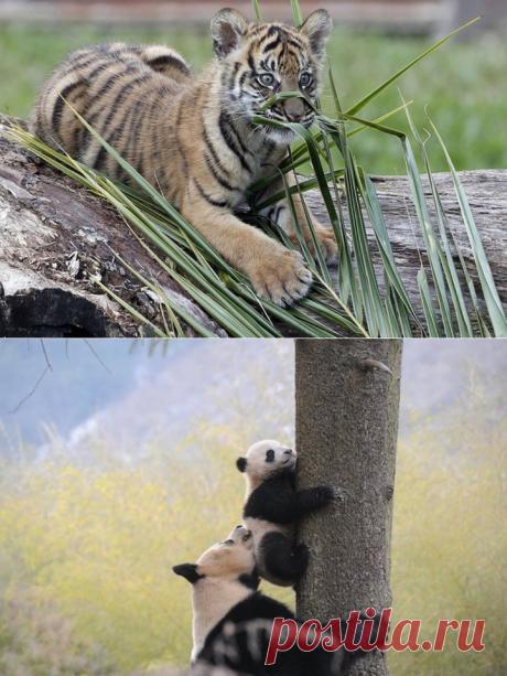 Красивые фото животных. (16 фото) | ФотоИнтерес