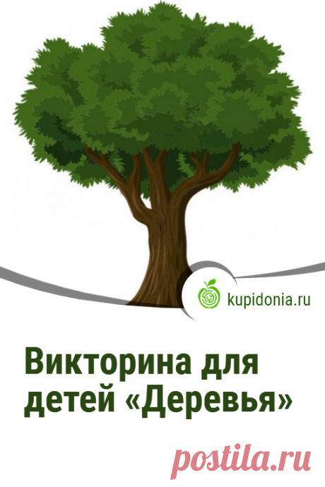 Викторина для детей «Деревья». Интересный тест для детей из серии «Растения» с простыми вопросами. Проверь свои знания!