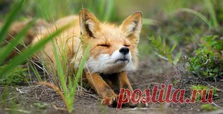 Как потягиваются животные? Смотрите очень милую фотоподборку на нашем сайте. И с добрым утром!