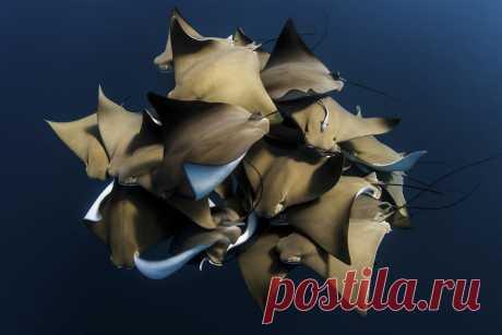 12 крутых фото, доказывающих, что под водой жизнь интереснее, чем у нас Там прям тусовки.