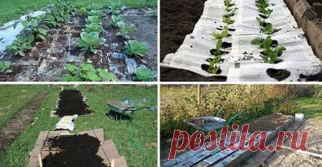 Картон и газеты на грядках: зачем нужны и как их применять без вреда для урожая Красивый Дом и Сад