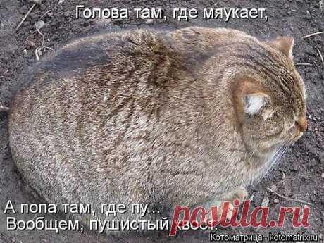 VAL* ВЕСЕЛАЯ ФЕРМА* — «не перепутай...» на Яндекс.Фотках