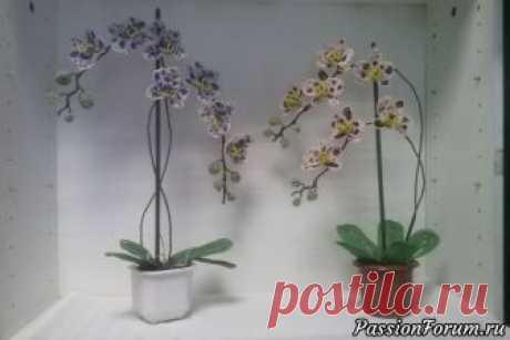 МК. Орхидея фаленопсис с пятнышками из бисера