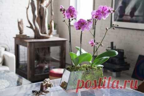 Как выбрать горшок для орхидеи 4 главных правила при выборе правильного горшка для орхидеи