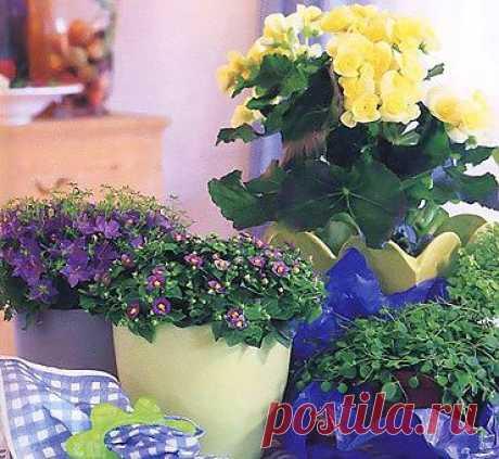Уход за домашними цветами зимой. Вредители комнатных растений   Любимые цветы