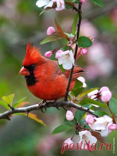 Բարի լույս բոլորիդ․․․🥀🥀🥀 Նոր օր, նոր երազանքներ, նոր հնարավորություններ,թող այսօր ամեն ինչ լավ լինի! Լավ օրը սկսում է բարի մտքերից և հաճելի գործերից։ Թող Ձեր մոտ լինի հենց այդպես․․․Շռայլենք իրար ժպիտ ու ծիծաղ, Միշտ բարի խոսքեր, Ծաղիկներ ու սեր.🌹💛 Լույսը դռանն է մնում, Ներս չի մտնում առանց քեզ: Ման եմ գալիս ինձ գտնեմ, Եվ չեմ գտնում առանց քեզ:  Երբ որ հեռու ես այդքան, Դու ավելի ես ինձ մոտ,  Ոչ մի օրս չի բացվում,  Ու չի մթնում առանց քեզ: Համո Սահյան