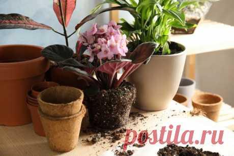 Мои хитрости размещения комнатных растений Личный опыт, фото — Ботаничка.ru