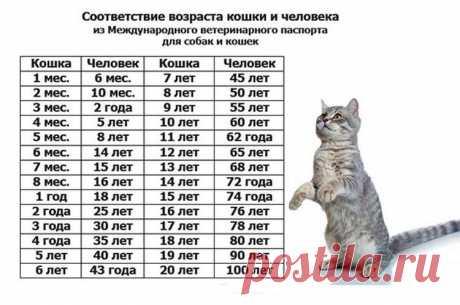 Как соотносится возраст кошки и человека — Полезные советы