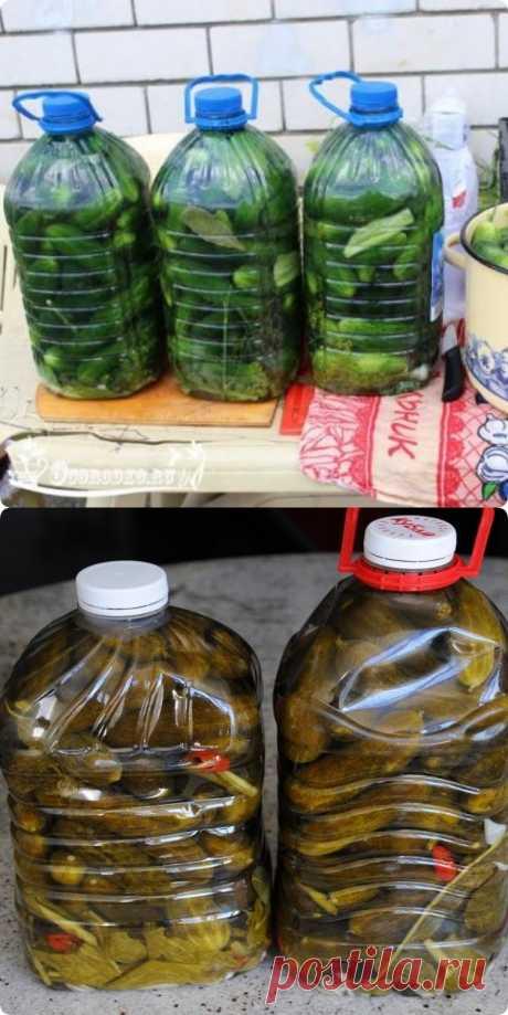 Огурцы в бутылке, как бочковые. Получаются настоящие бочковые огурчики, очень вкусно! - fav0ritka77.ru