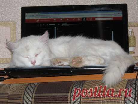 Компьютерный кот