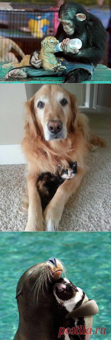 Животные помогают друг другу : НОВОСТИ В ФОТОГРАФИЯХ
