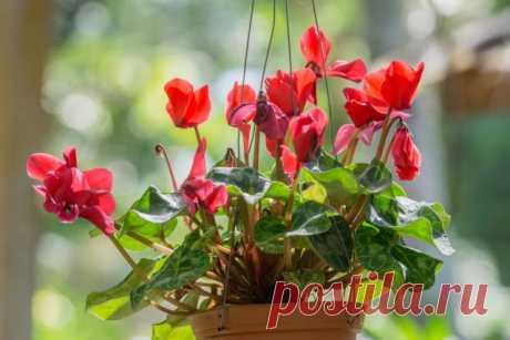 Топ-10 лучших комнатных растений для северных окон   Полезно (Огород.ru)