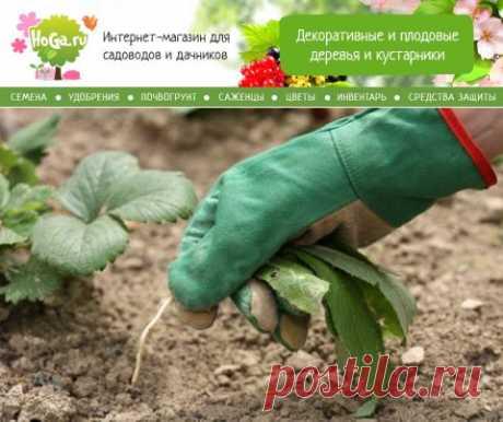 Огород без сорняков | Supersadovod - о саде и огороде просто и интересно
