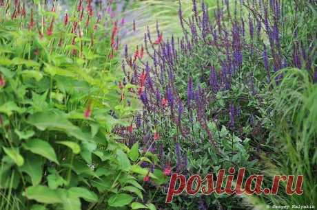 5 цветов моего сада, которые вынесут жару и засуху без полива | Сады и цветы | Яндекс Дзен