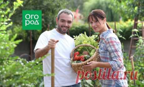 Бесплатные удобрения, которые есть в каждом доме | Дела огородные (Огород.ru)