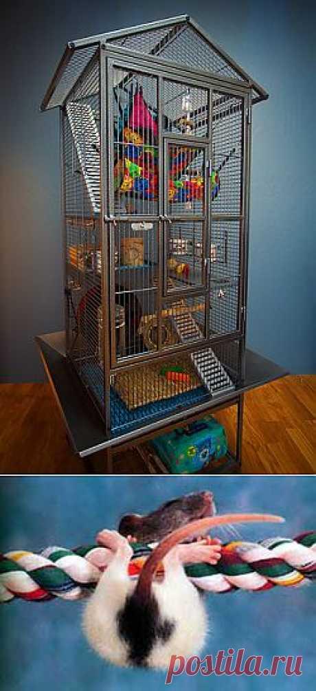 Игры и игрушки для декоративных крыс | Грызунчик