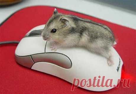 Маленькие тайны компьютерной мыши.