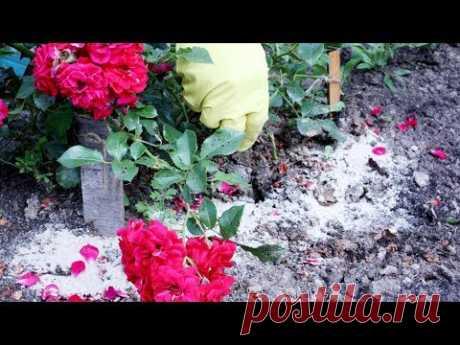 Фосфорно-калийная подкормка растений во второй половине лета