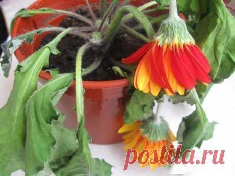 Волшебное зелье для оживления растений в горшках
