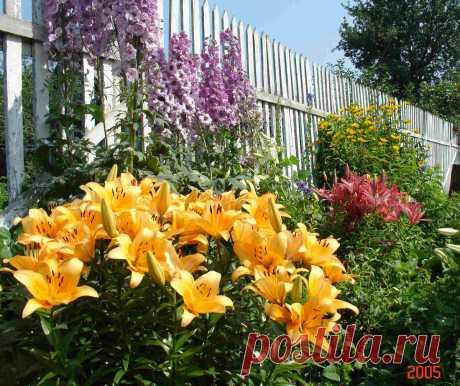 5 цветов, которые НУЖНО пересадить в августе | 6 соток