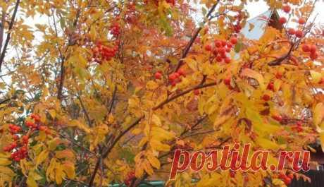 Осенний бал   Уютный бложек   Яндекс Дзен
