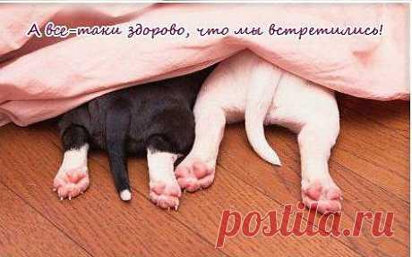 Один белый-другой черный..Два веселых хвостика))