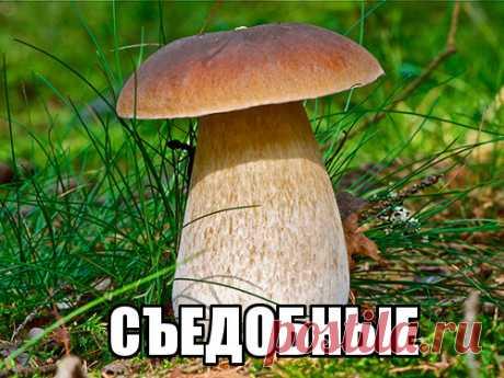 Название грибов, фото и описание - энциклопедия RusGrib