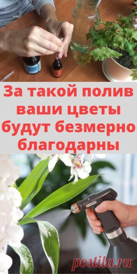 За такой полив ваши цветы будут безмерно благодарны - My izumrud
