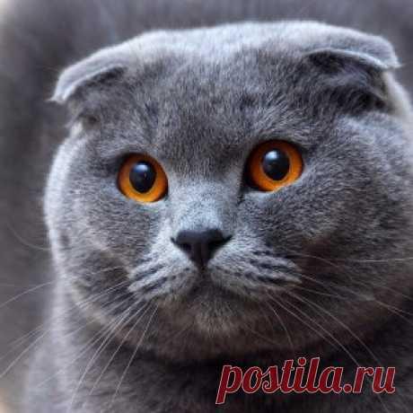Нужно ли запретить разведение кошек-мутантов? Шотландская вислоухая. Что с ней не так?
