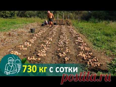Посадка картофеля вразвал без окучивания 🚀 Выращивание по технологии Гордеевых
