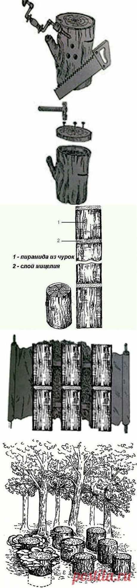 Как выращивать вешенки на пнях